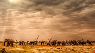 Locations Botswana Southeast Botswana  image